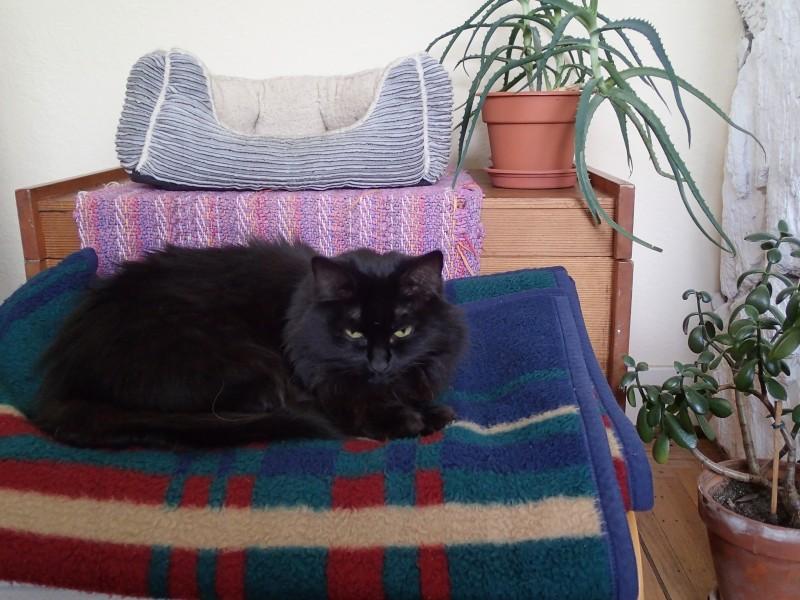 Sashi the cat