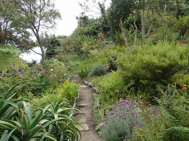 Telegraph Hill gardens