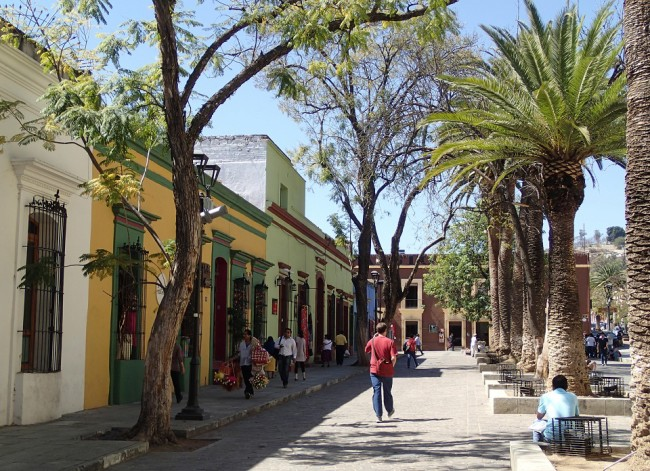 A quiet street lined with palm trees (Oaxaca)