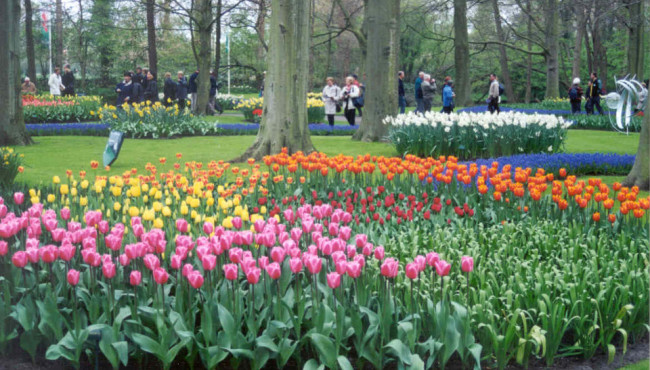 Keukenhof Gardens (The Netherlands)