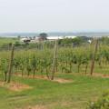 Domaine de Grand Pre vineyards (Nova Scotia)
