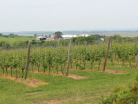 Domaine de Grand Pre vineyards