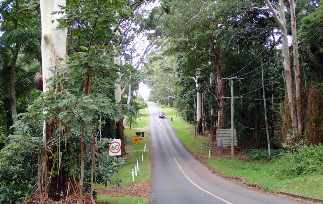 My stree (Tamborine Mountain)