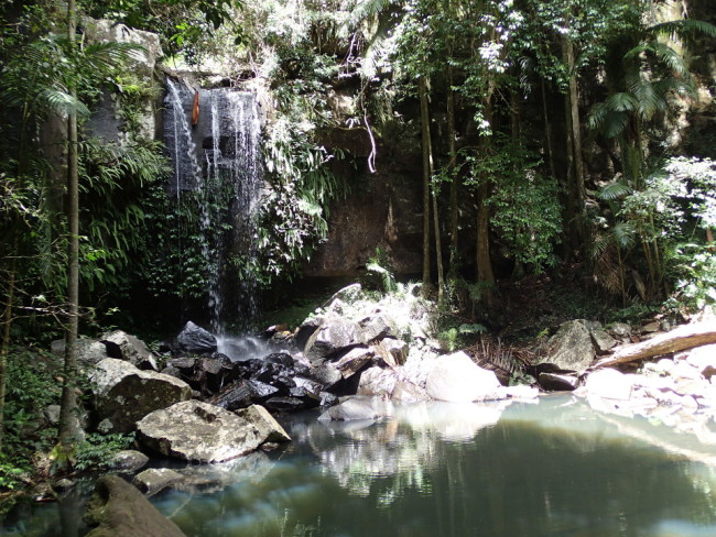 Curtis Falls (Tamborine Mountain)