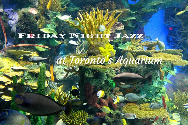 Friday Night Jazz at Toronto's Aquarium