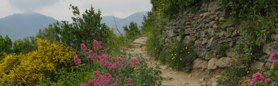 Hiking path in the Cinque Terre, Italy