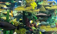 Tropical reef at Ripley's Aquarium of Canada