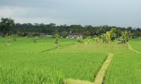 Bali rice fields,  Indonesia