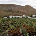 Guatiza (Lanzarote away from the resorts)