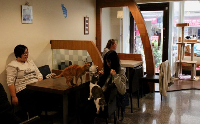 Cat cafe in Tainan, Taiwan (things I love about Taiwan)