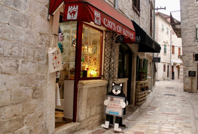 Cats of Kotor gift shop (guide to Kotor)