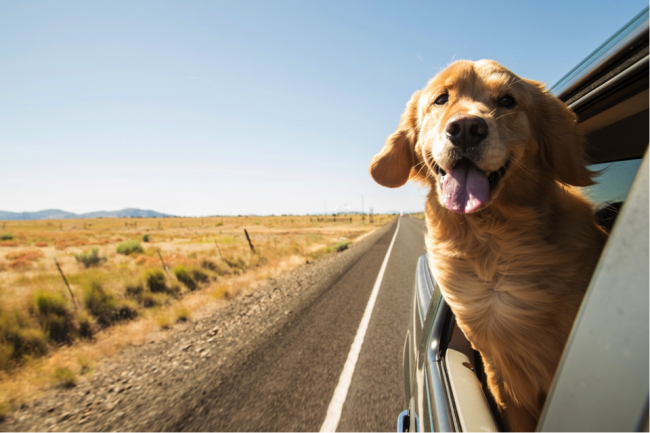 Bring your dog on a road trip (road travel in the US)