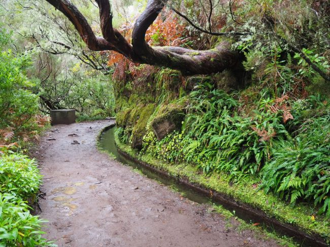 A levada walk near Rabaçal, Madeira (best winter destinations in Europe)