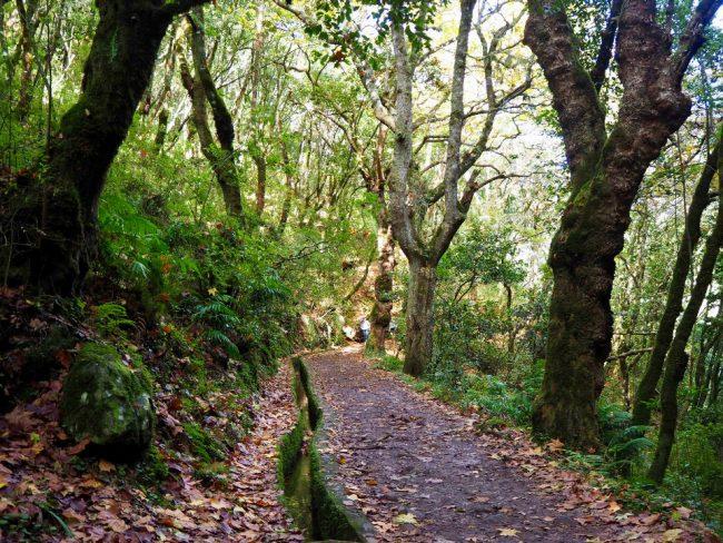 Vereda dos Balcões trail (hikes in Madeira)