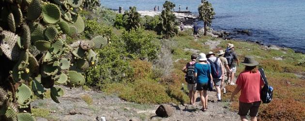 Cactuses, South Plaza, Galapagos