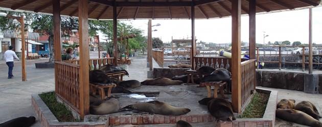 Sea lions, San Cristobal, Galapagos