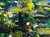 Tropical reef at Ripley's Aquarium of Canada
